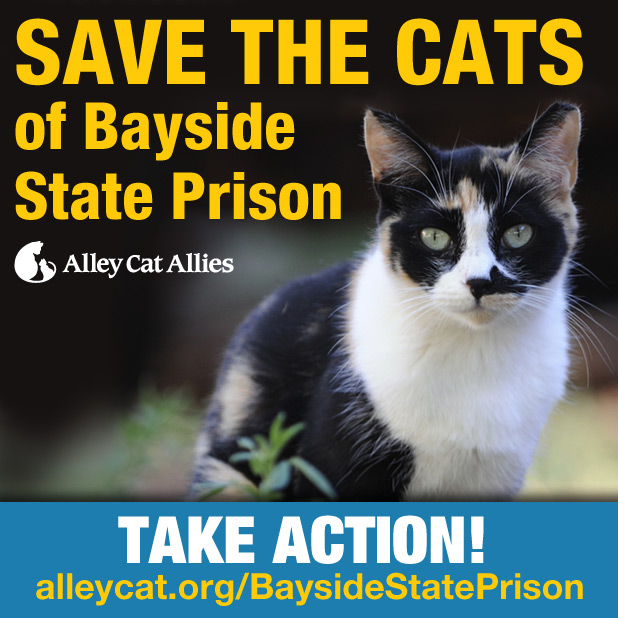 Link: Help save the cats at Bayside State Prison, this link will take you 